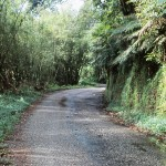 Narrow road through mountain rainforest, Trinidad